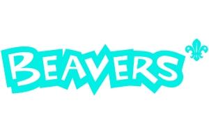 newbeaver
